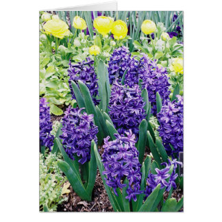 Hyacinths and African Tulips Card