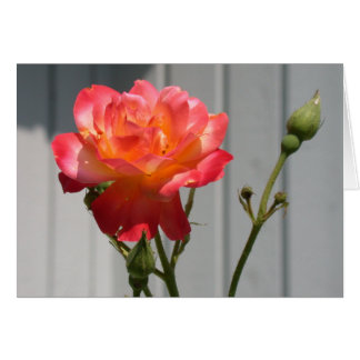 Hybrid English Tea Rose Note Card