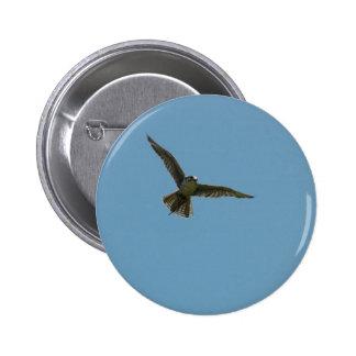 hybrid falcon pinback buttons