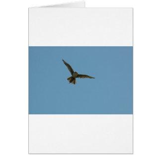 hybrid falcon greeting card