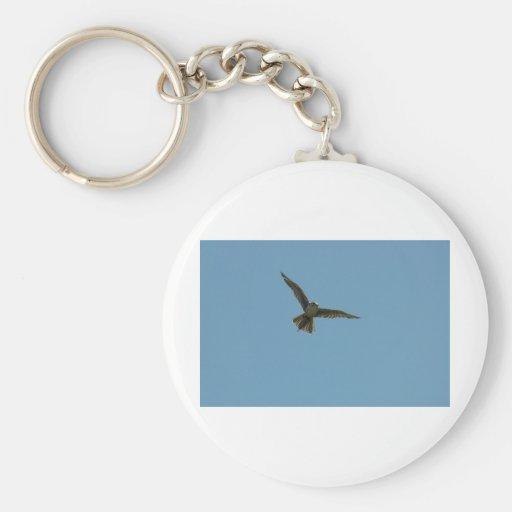 hybrid falcon key chains