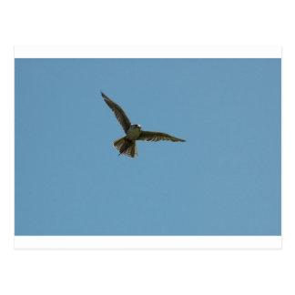 hybrid falcon postcard