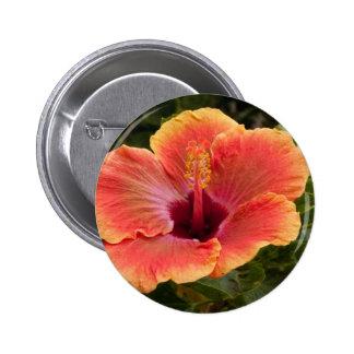 Hybrid Hibiscus Button