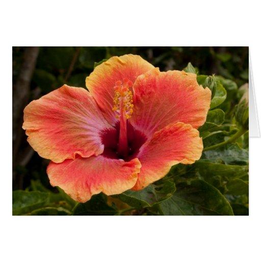 Hybrid Hibiscus Card