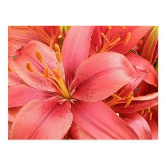 Hybrid Lilies Coordinating Items Postcard