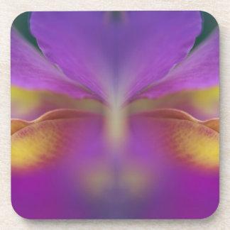 Hybrid orchid, Florida 2 Coasters