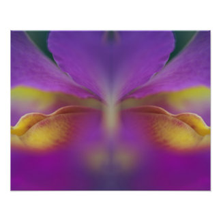 Hybrid orchid, Florida 2 Poster