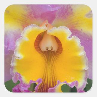 Hybrid orchid, Florida Square Sticker