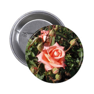 Hybrid Tea Rose Pins
