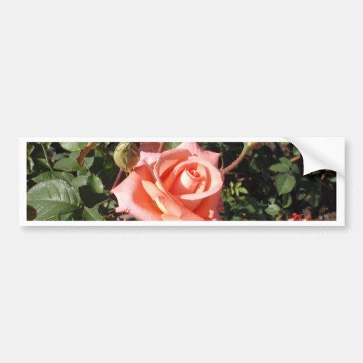 Hybrid Tea Rose Bumper Stickers
