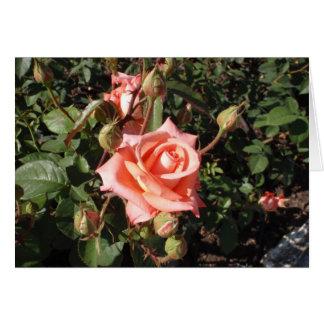 Hybrid Tea Rose Greeting Cards