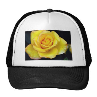 Hybrid Tea Rose  flowers Trucker Hats