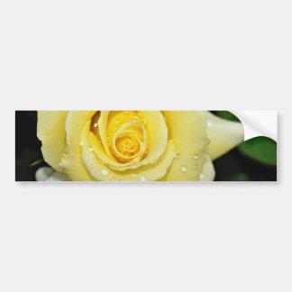 Hybrid Tea Rose 'Helmut Schmidt' White flowers Bumper Sticker