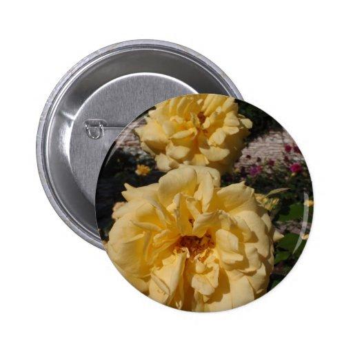 Hybrid Tea Rose Landora Button