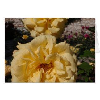 Hybrid Tea Rose Landora Greeting Card