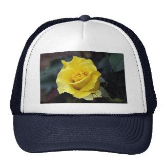 Hybrid Tea Rose 'Lanvin' Roses Hats