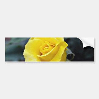 Hybrid Tea Rose 'Lanvin' White flowers Bumper Stickers