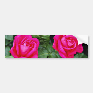 Hybrid Tea Rose 'Miss All American Beauty' Yellow Bumper Sticker