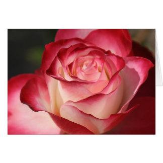 Hybrid Tea Rose Note Card