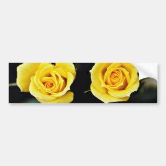 Hybrid Tea Rose 'Oregold' Yellow flowers Bumper Sticker
