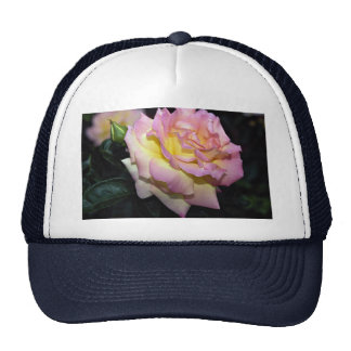 Hybrid Tea Rose 'Peace' Roses Mesh Hats