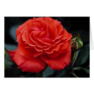Hybrid Tea Rose Roses Greeting Card
