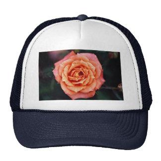 Hybrid Tea Rose Roses Mesh Hat