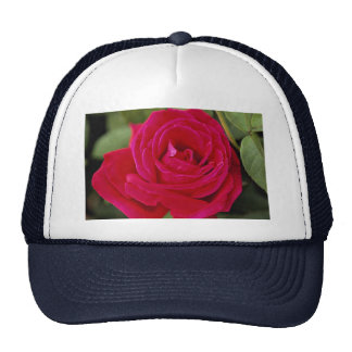 Hybrid Tea Rose Roses Mesh Hats