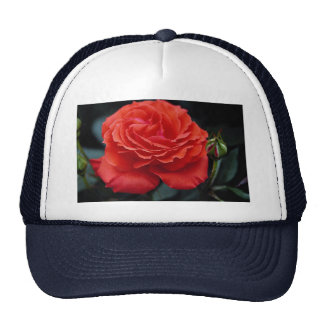 Hybrid Tea Rose Roses Hats