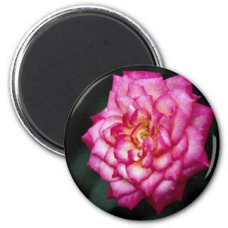 Hybrid Tea Rose Roses Refrigerator Magnets