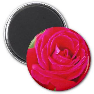 Hybrid Tea Rose White flowers 6 Cm Round Magnet