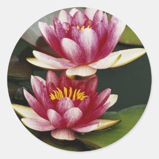 Hybrid water lilies round sticker