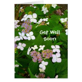 Hydrangea Aspera - Get Well Soon Greeting Card