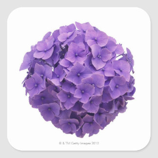 Hydrangea Ball Close-up Square Sticker