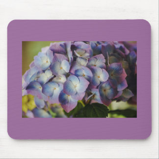 Hydrangea Blooms Mousepads