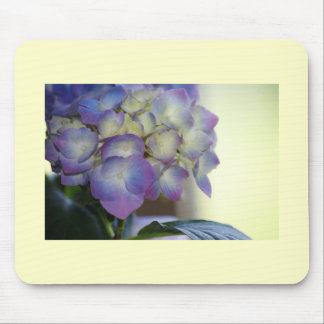Hydrangea Blooms Mouse Pads