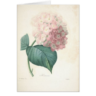 Hydrangea by Redoute Botanical Sympathy Card