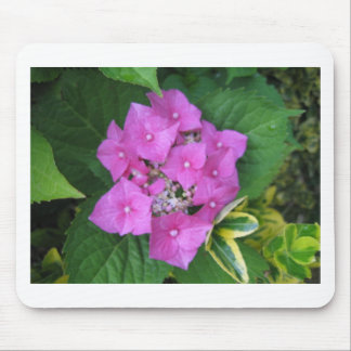 Hydrangea Flowers Mouse Pad