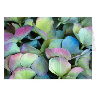 HYDRANGEA  Multi-color petals --- Card