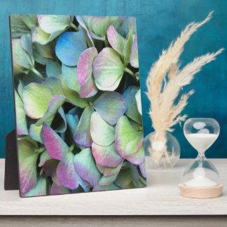 HYDRANGEA  Multi-color petals --- Plaque
