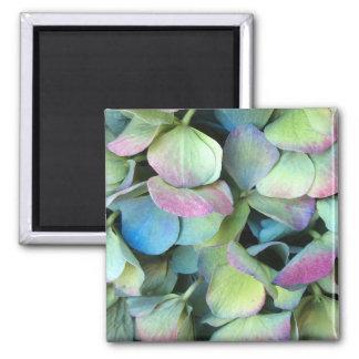 HYDRANGEA  Multi-colour petals --- Square Magnet