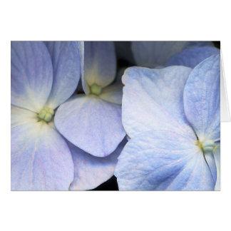 Hydrangea Petals Greeting Card