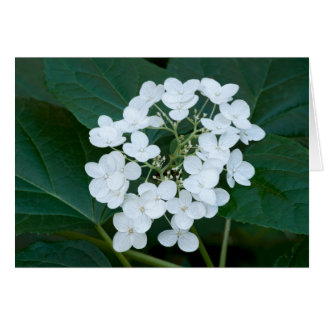 Hydrangea Plant and Flowers Card