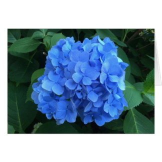 HYDRANGEA so Blue & Green - Card