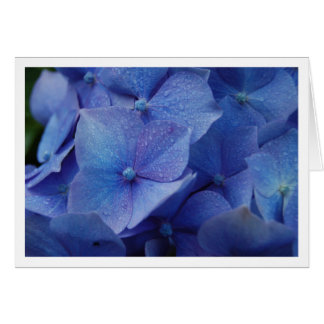 Hydrangeas Card
