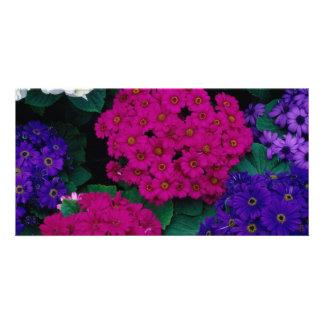 HYDRANGEAS DARK PINK PURPLES FLOWERS BEAUTY NATURE PICTURE CARD