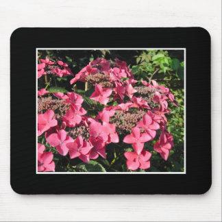 Hydrangeas. Pink Flowers on Black. Mouse Pad