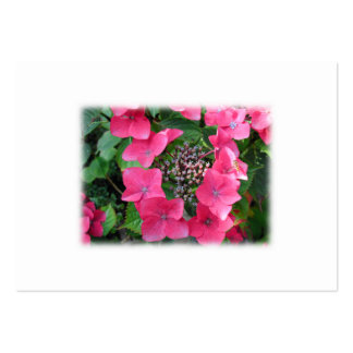 Hydrangeas. Pink Flowers. White. Pack Of Chubby Business Cards