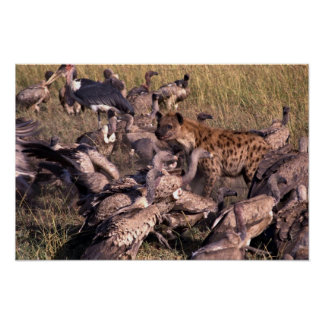 Hyena in the middle of vultures poster
