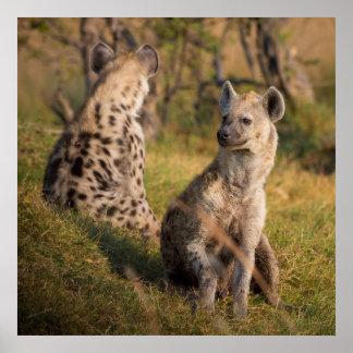 Hyenas Poster